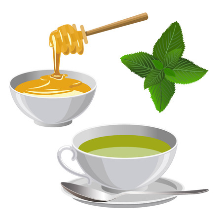 Cup of green tea with honey and sprig of mint. Vector illustration isolated on the white background