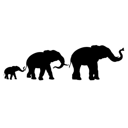 Silhouettes of elephants isolated on a white background. Bull, cow and calf. Vector illustration