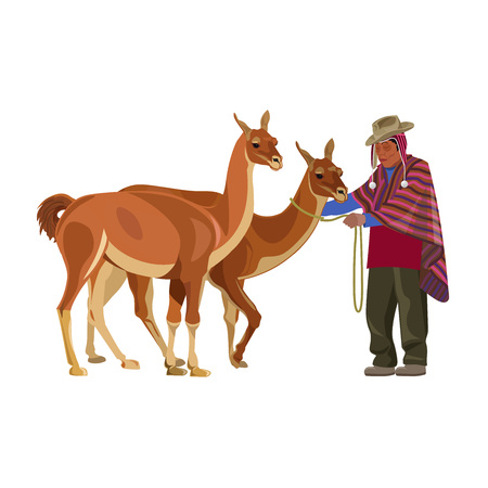 Peruvian man in national dress with guanacos. Vector illustration isolated on the white background