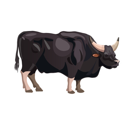 Gayal bull, vector illustration isolated on the white background Imagens - 90907859