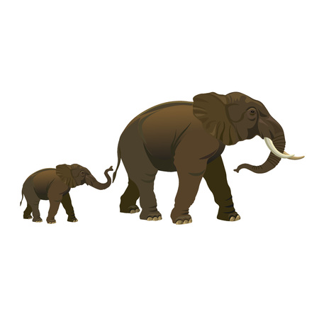 Elephant cow with calf. Vector illustration isolated on the white background