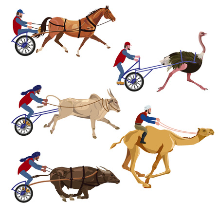 Set of vector illustration horse, bulls, camel and ostrich races