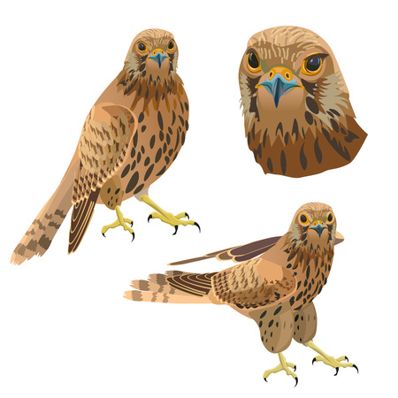 Birds of prey set. Vector illustration isolated on white background.