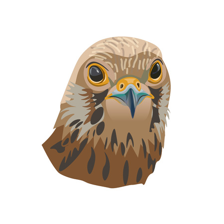 Portrait of a bird of prey. Falcon. Vector illustration isolated of the white background.  イラスト・ベクター素材