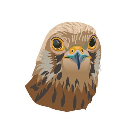 Portrait of a bird of prey. Falcon. Vector illustration isolated of the white background. Illusztráció