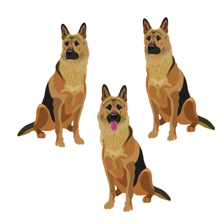Set of German shepherd dogs. Vector illustration isolated on the white background.