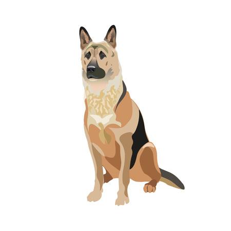 East European shepherd dog. Vector illustration isolated on the white background.