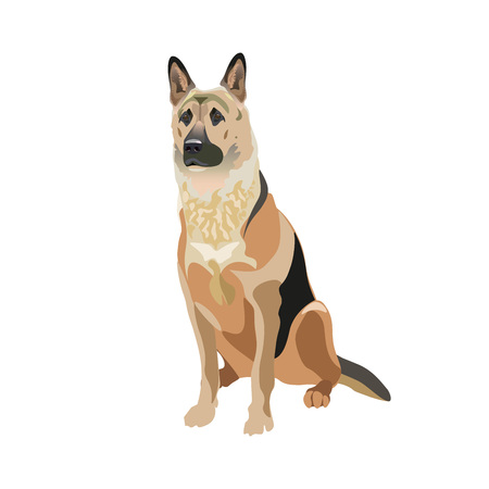 East European shepherd dog. Vector illustration isolated on the white background.