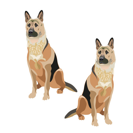 East European shepherd dogs. Vector illustration isolated on the white background.