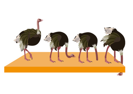 Ostrich collection set. Vector illustration isolated on the white background.