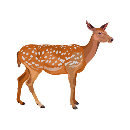 Female fallow deer. Vector illustration isolated on the white background.