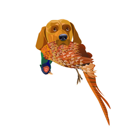 Hunting dog with a pheasant in the mouth. Vector illustration isolated on white background.