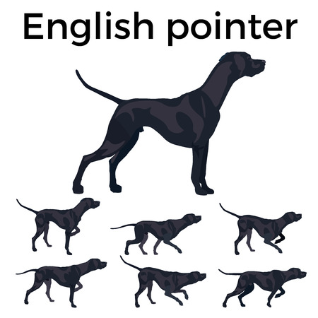 Set of vector pointer dog. Vector illustration isolated on the white background. Stock Illustratie