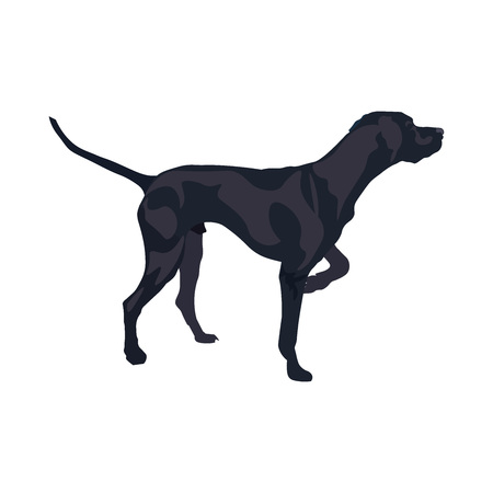 English pointer gun dog breed. Vector illustration isolated on the white background. Vettoriali