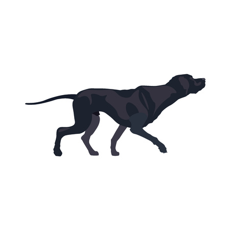 Top bird hunting dog breed - pointer. Vector illustration isolated on the white background. Ilustração