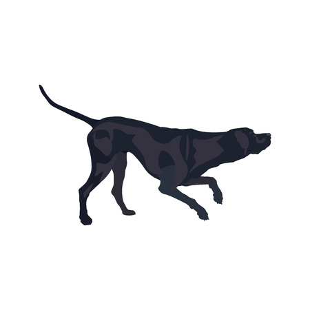 Pointer on point. Gun dog breed. Vector illustration isolated on the white background.