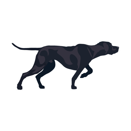 Classic pointer stance. Gun dog breed. Vector illustration isolated on the white background. Ilustração