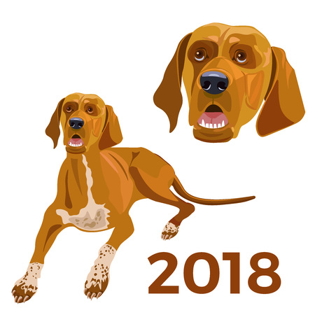 Yellow dog. Vector template New Years design on the Chinese calendar. Vector illustration. Illustration