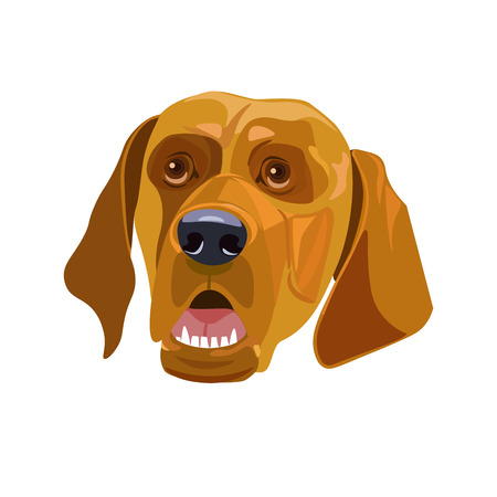 Head of a yellow dog. Vector template New Years design on the Chinese calendar. Vector illustration Illustration