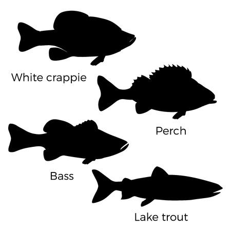 Silhouettes de poissons d'eau douce - marigane blanche, perche, achigan et truite grise. Illustration vectorielle isolée sur fond blanc
