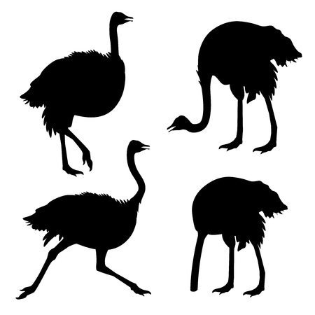 Set of ostrich silhouettes . Vector illustration isolated on the white background Vettoriali