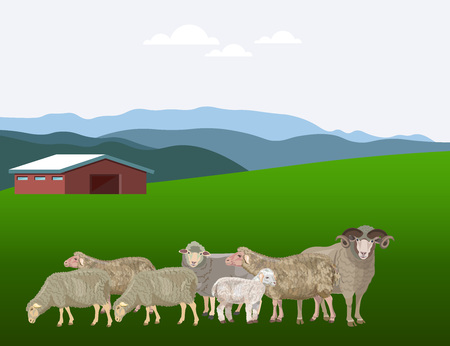 Flock of sheep grazing on mountain pasture. Vector illustration Ilustrace