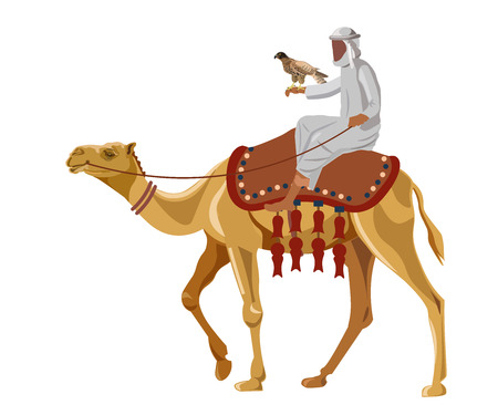 Hunter with falcon on camel. Vector illustration isolated on white background. Stock Illustratie