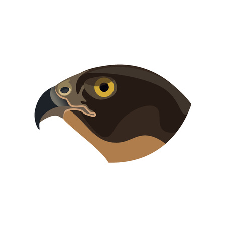 Portrait of a bird of prey. Falcon. Vector illustration isolated of the white background Illustration