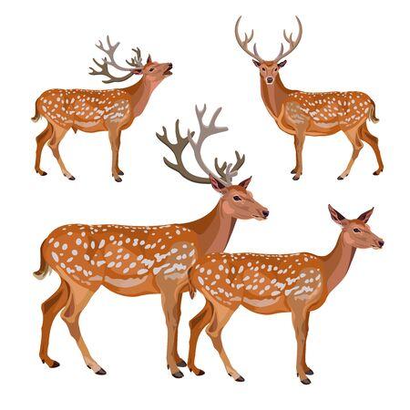 Colección de ciervos aislado sobre fondo blanco. Ilustración vectorial