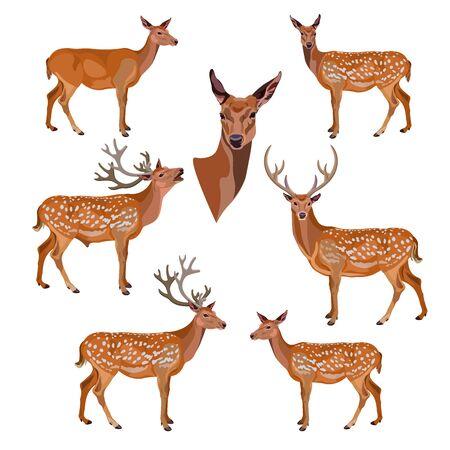 Colección de ciervos aislado sobre fondo blanco. Ilustración vectorial Ilustración de vector