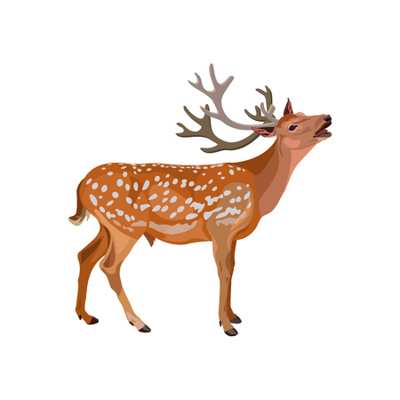 Roaring deer stag. Vector illustration isolated on the white background Vettoriali