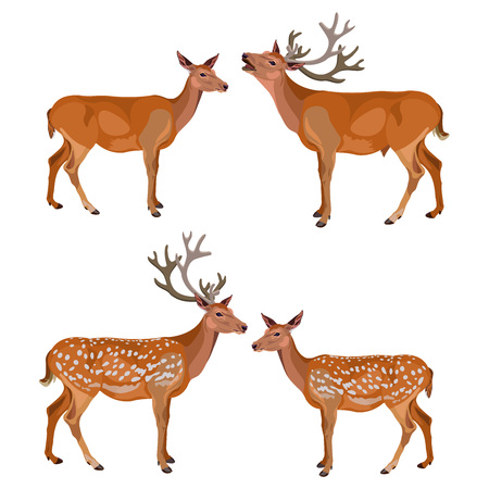Collection of deer isolated on white background. Vector illustration.