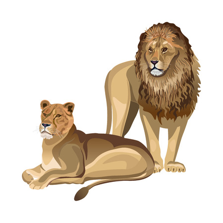 Pair of lions. Lioness lying down and male lion standing. Vector illustration isolated on the white background Vettoriali