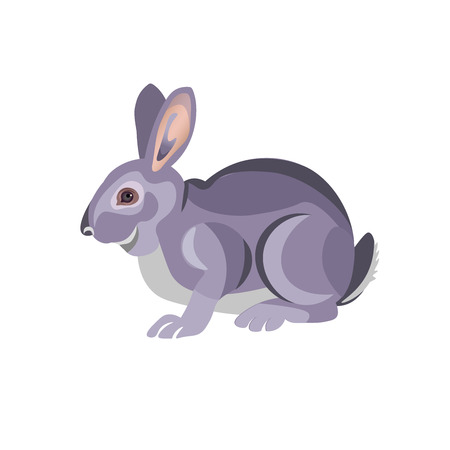 Gray rabbit sitting. Vector illustration isolated on white