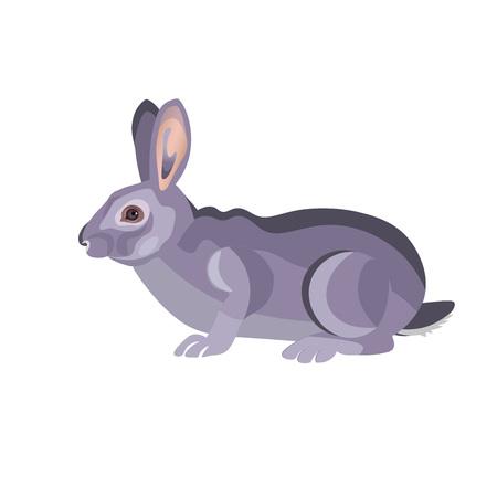 Gray rabbit. Vector illustration isolated on white Illustration