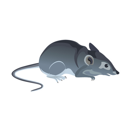 Common house mouse. Vector illustration isolated on white background