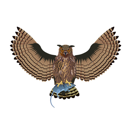 Owl with open wings holds a mouse. Vector illustration isolated on white background