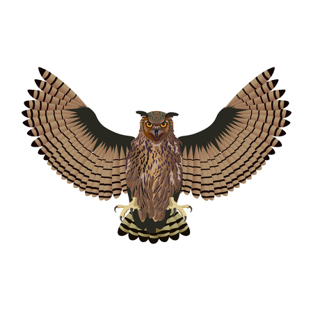 Attacking owl with open wings. Vector illustration isolated on white background Stock Vector - 94687599