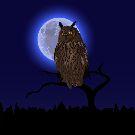 Owl on tree at midnight with full moon background