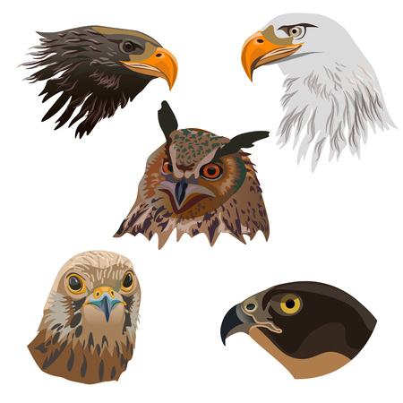Portraits of birds of prey. Set of vector illustration isolated on white background.
