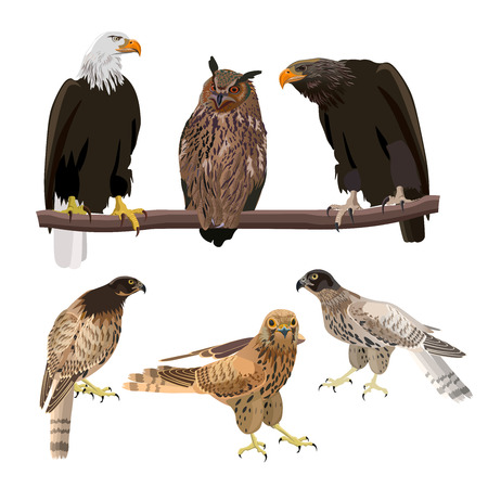 Birds of prey. Set of vector illustration isolated on white background.