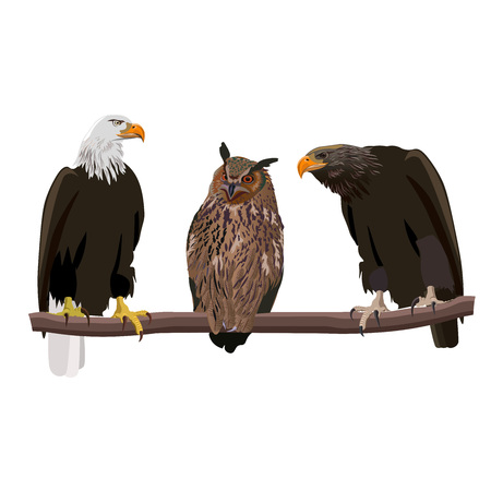 Birds of prey set - bald eagle, eagle-owl and golden eagle . Vector illustration isolated on white background. Illustration