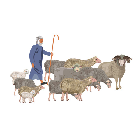 Shepherd with a flock of sheep. Vector illustration isolated on white background