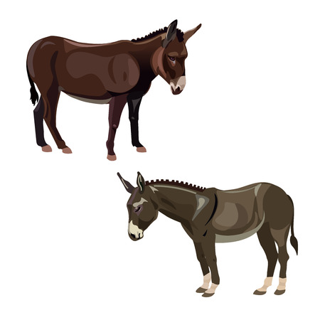 Two donkeys, side view. Vector illustration isolated on the white background 일러스트