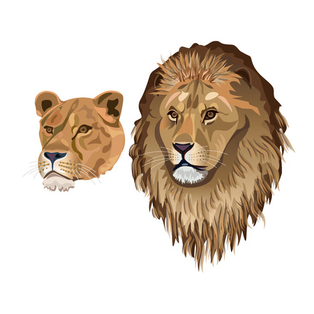 Portrait of pair of African lions. Vector illustration isolated on the white background