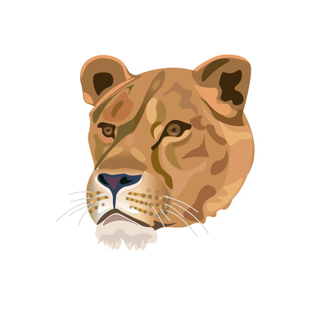 Portrait of lioness. Vector illustration isolated on the white background