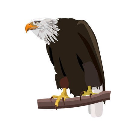 Bald eagle sitting on a tree branch. Vector illustration isolated on the white background Иллюстрация