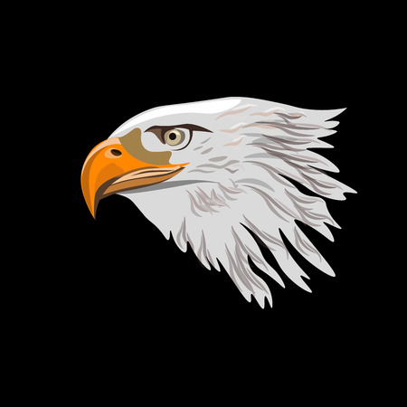 Bald eagle head. Vector illustration isolated on the black background