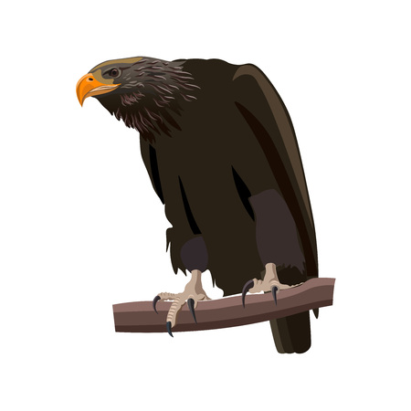Eagle sitting on a tree branch. Vector illustration isolated on the white background