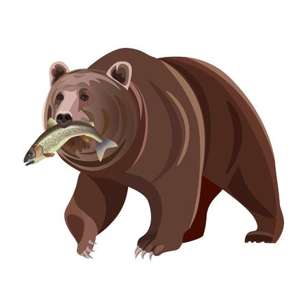 Grizzlybär mit Fisch im Mund. Vektorabbildung getrennt auf weißem Hintergrund Standard-Bild - 96922285